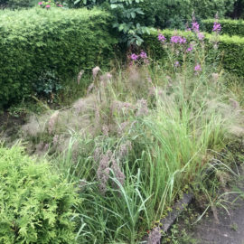 Umwelt- und Naturschutz auf dem Stellinger Friedhof